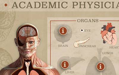 illustration of human anatomical diagram